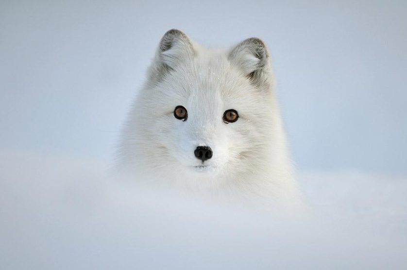 amazing-fox-photos-5