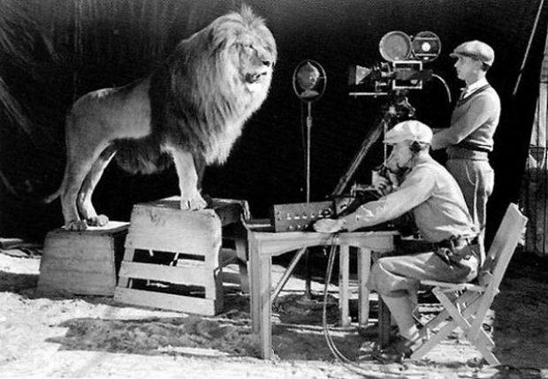 Cinegrafistas registram o som e a imagem durante a gravação do rugido do leão para o logotipo da MGM