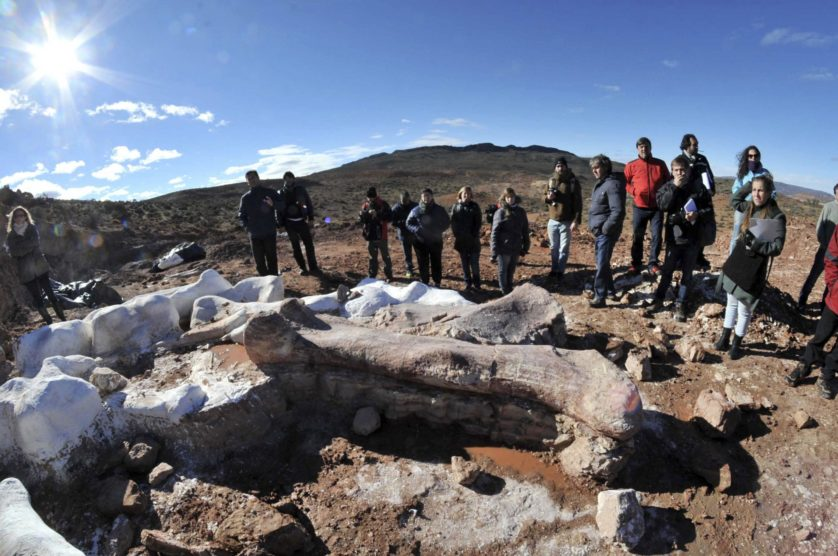 Residents and technicians look at the bones of a dinosaur at a farm in La Flecha