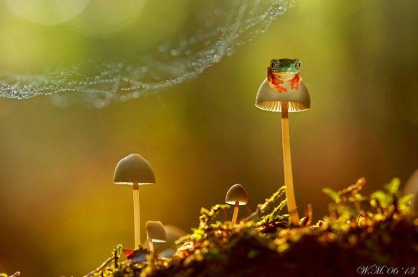 macro-frogs-wil-mijer-3