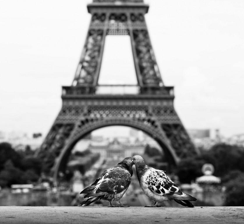 fotos animais se beijando passarinhos paris