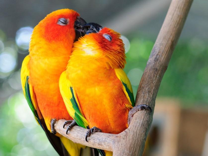 fotos de animais se beijando araras