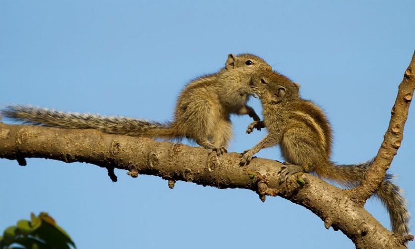 fotos de animais se beijando esquilos bebês