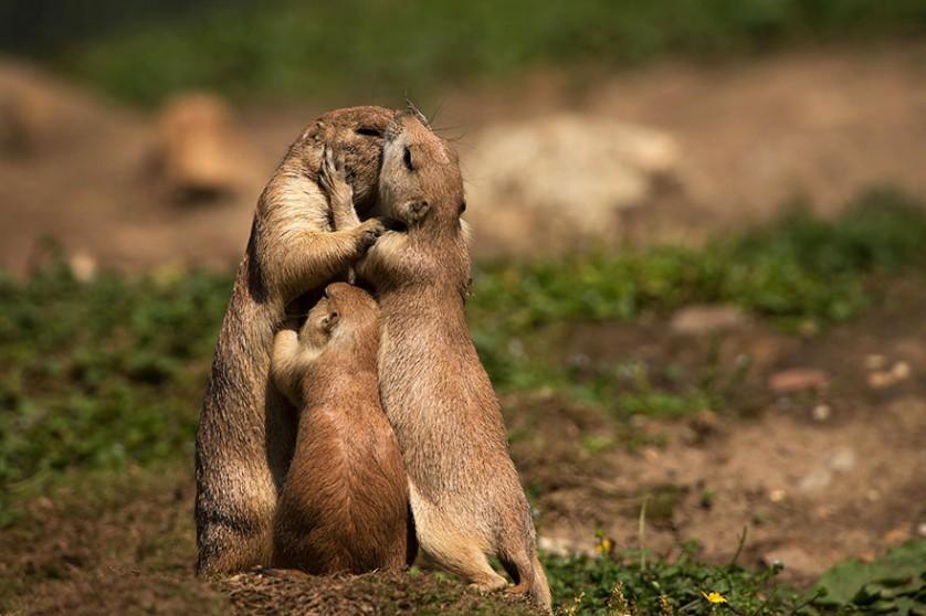 fotos de animais se beijando esquilos