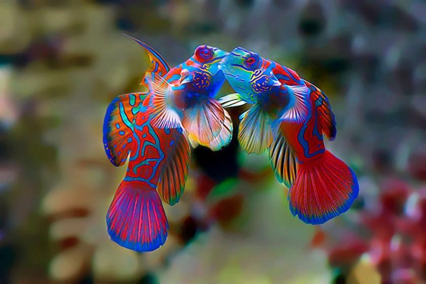 fotos de animais se beijando peixes