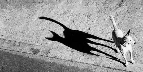 Resultado de imagem para sombras