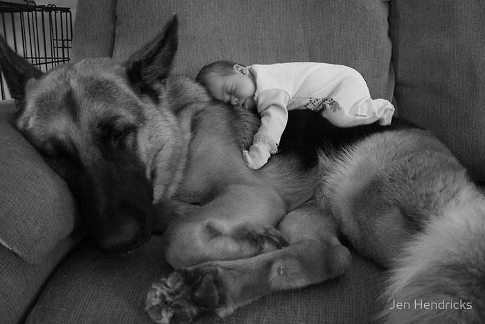bebezinhos e seus caes (1)