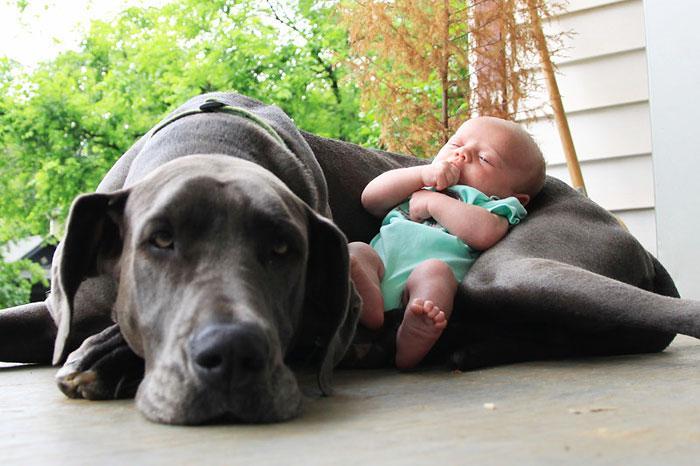 bebezinhos e seus caes (10)