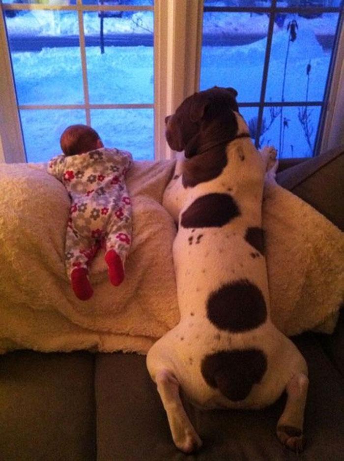 bebezinhos e seus caes (2)