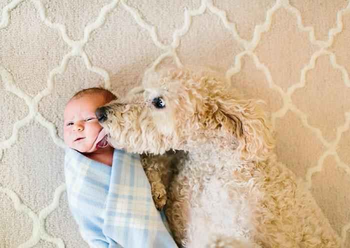 bebezinhos e seus caes (7)