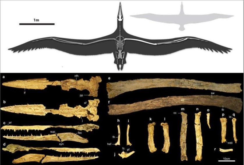 big-bird-fossil