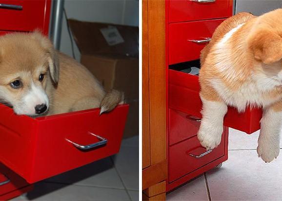 Depois de grande: 21 fotos belíssimas de cachorros antes e depois