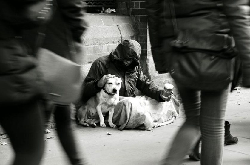 caes e moradores de rua (5)