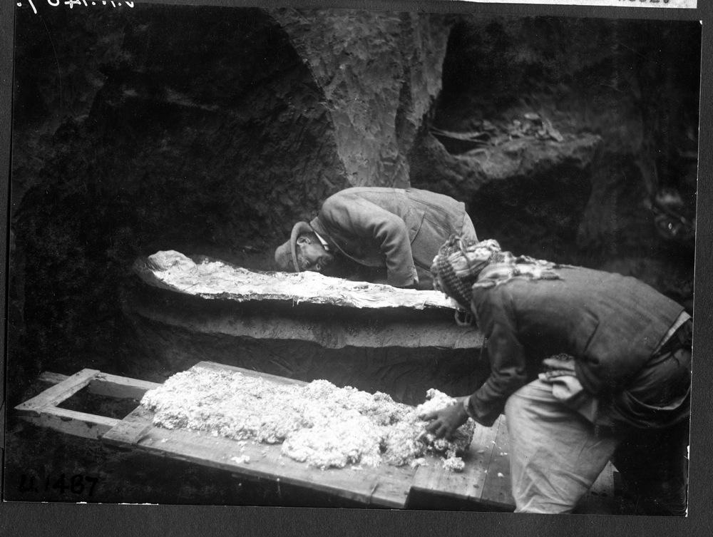 """Esqueleto de """"Noé"""" é descoberto no porão de museu"""