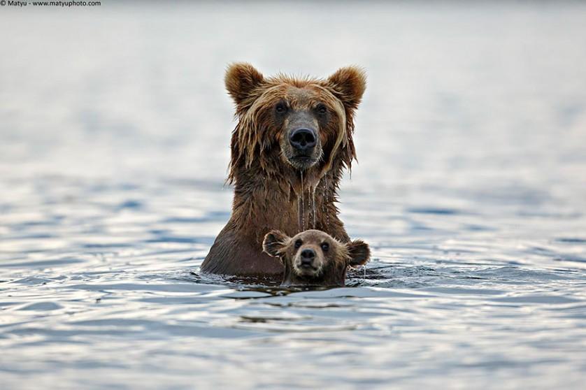 filhotes de ursos 1