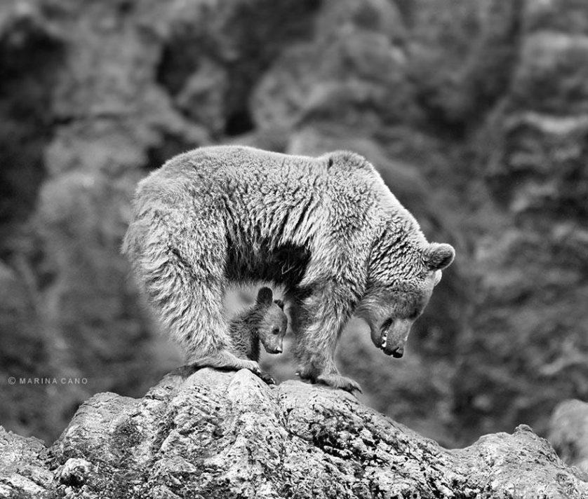filhotes de ursos 13
