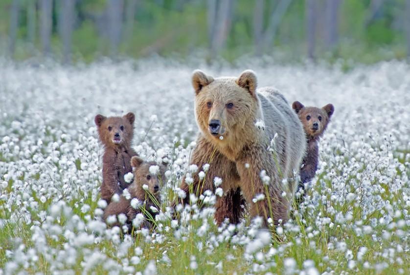 filhotes de ursos 19