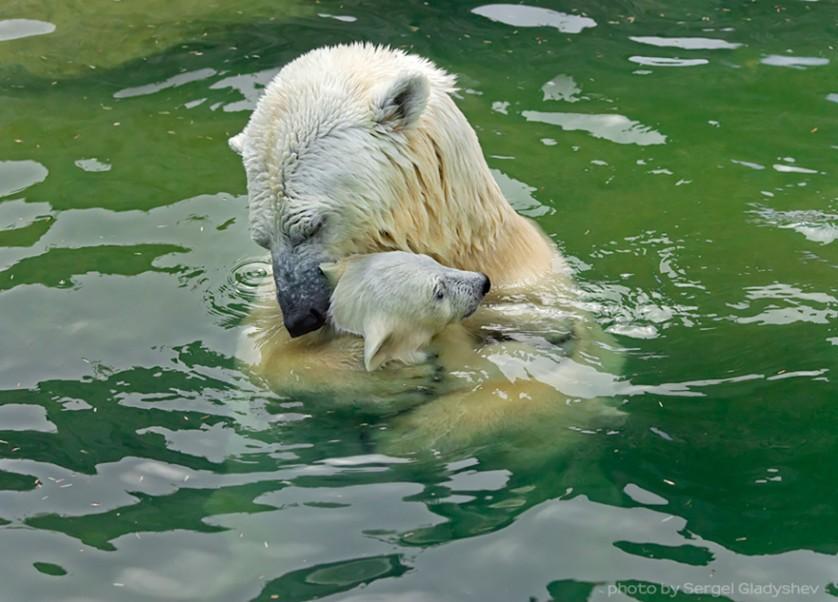 filhotes de ursos 20