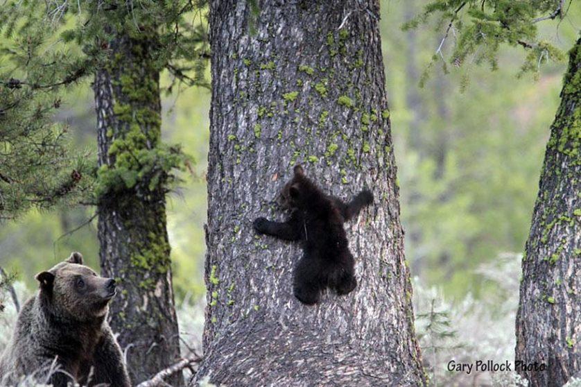 filhotes de ursos 5