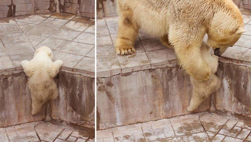 filhotes de ursos 7