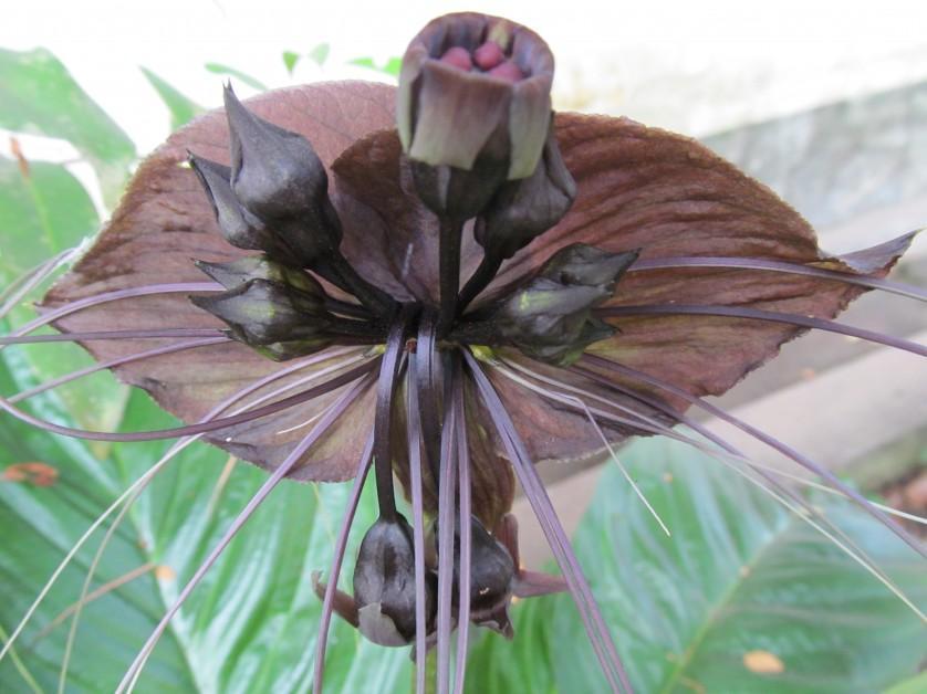 flores estranhas 2