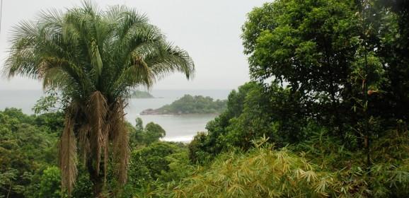 Brasil poderia salvar a Mata Atlântica investindo apenas 0,01% do seu PIB anual