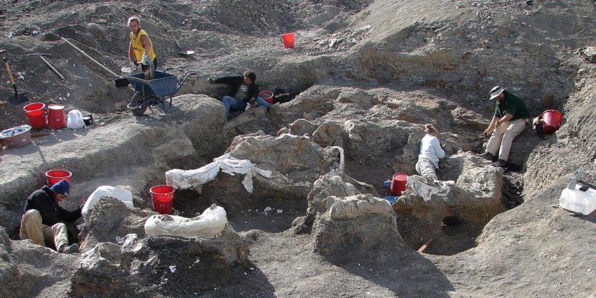 Dreadnoughtus 2