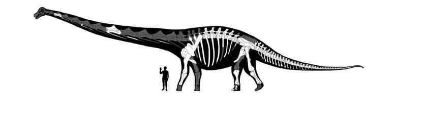 Dreadnoughtus 5