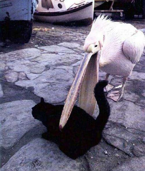 animais agindo como idiotas 14