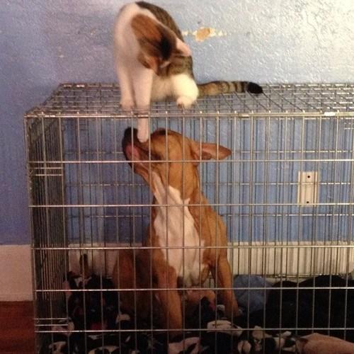 animais agindo como idiotas 23