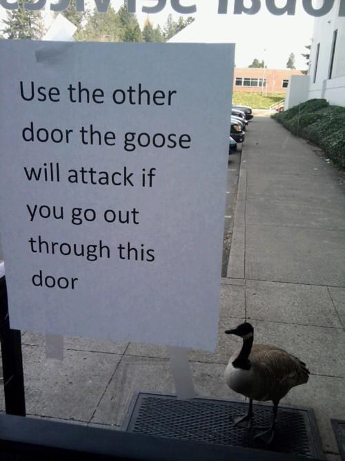 animais agindo como idiotas 9