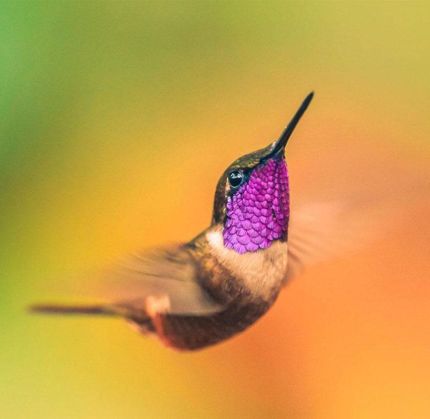 beija-flores 10