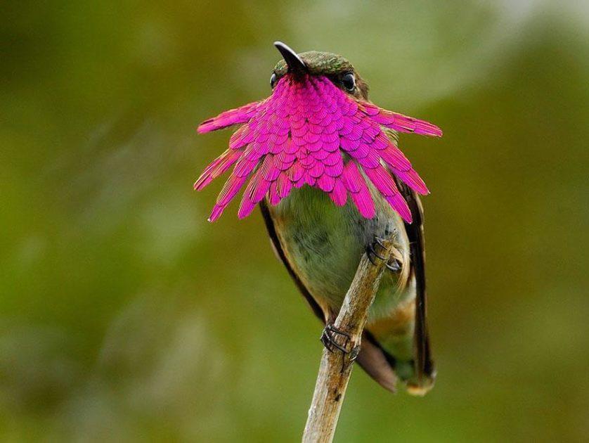 beija-flores 2