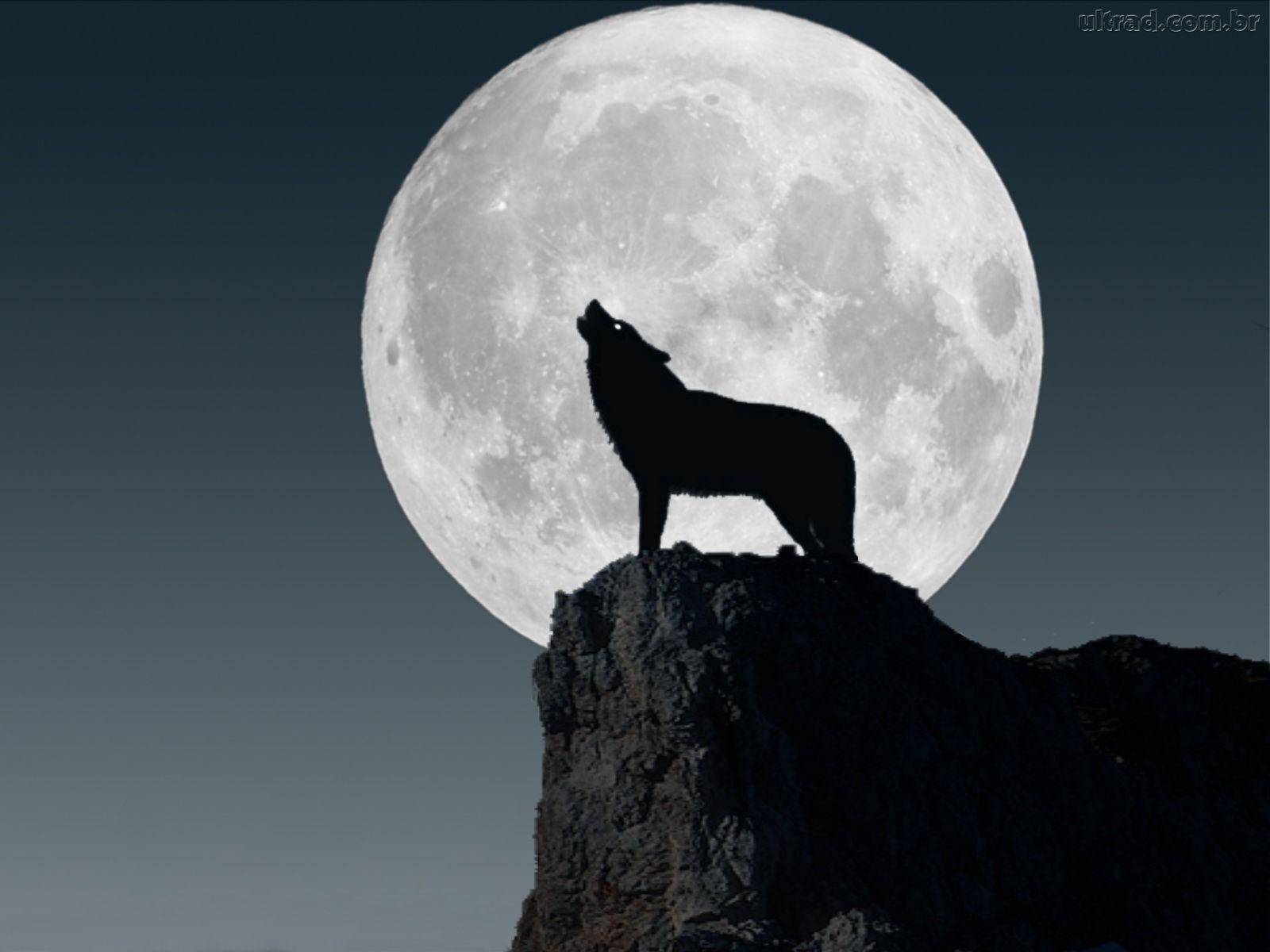 Lobos Perros Siluetas Mamíferos: Impressionante Comunicação Entre Humano E Animais