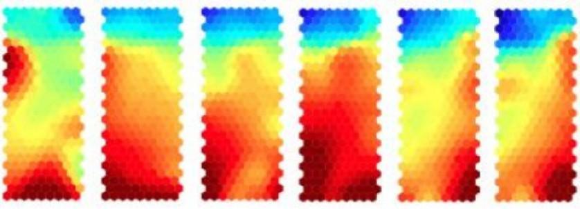 A expressão dos genes muda gradualmente em cada fase do tratamento, tal como ilustrado pelas mudanças de cor nesta série de mapas de calor