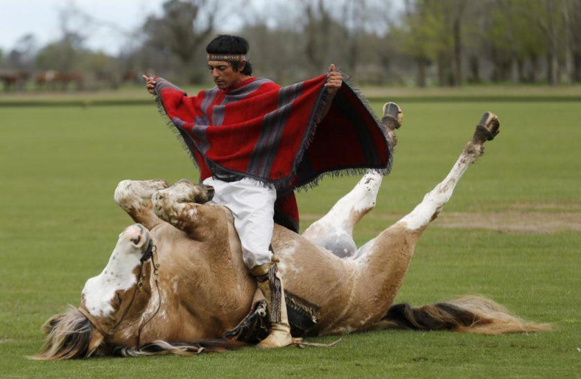 encantador de cavalos 2
