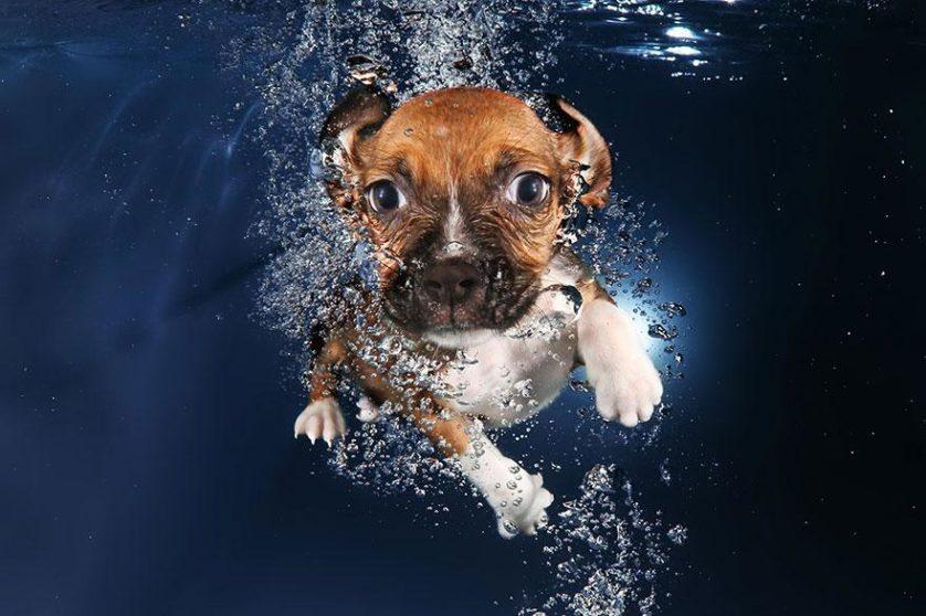 filhotes de cachorro mergulhando (10)
