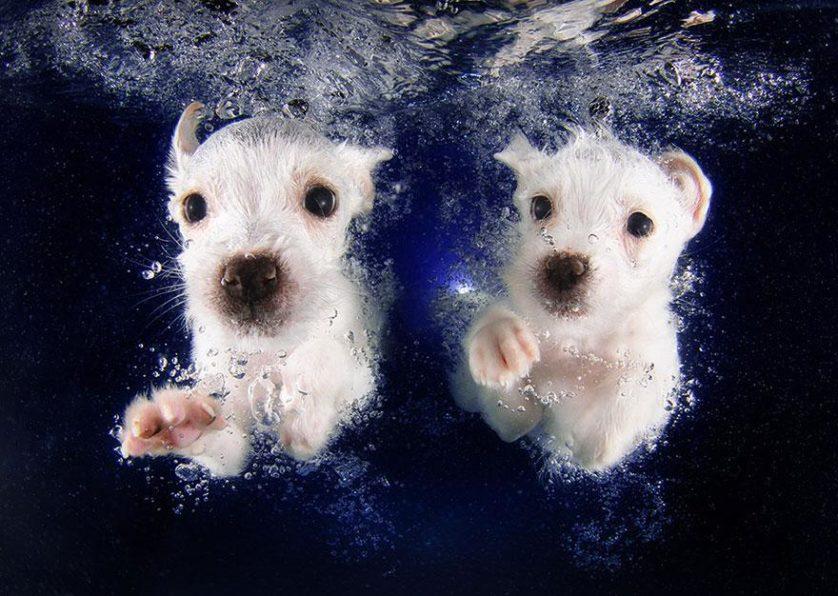 filhotes de cachorro mergulhando (2)