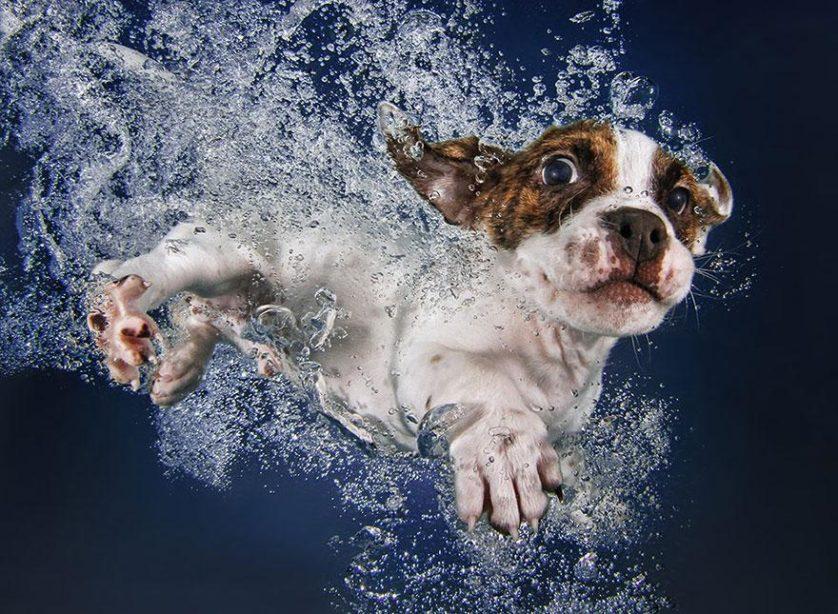 filhotes de cachorro mergulhando (3)