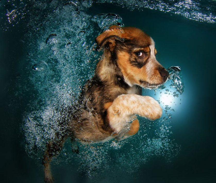 filhotes de cachorro mergulhando (4)