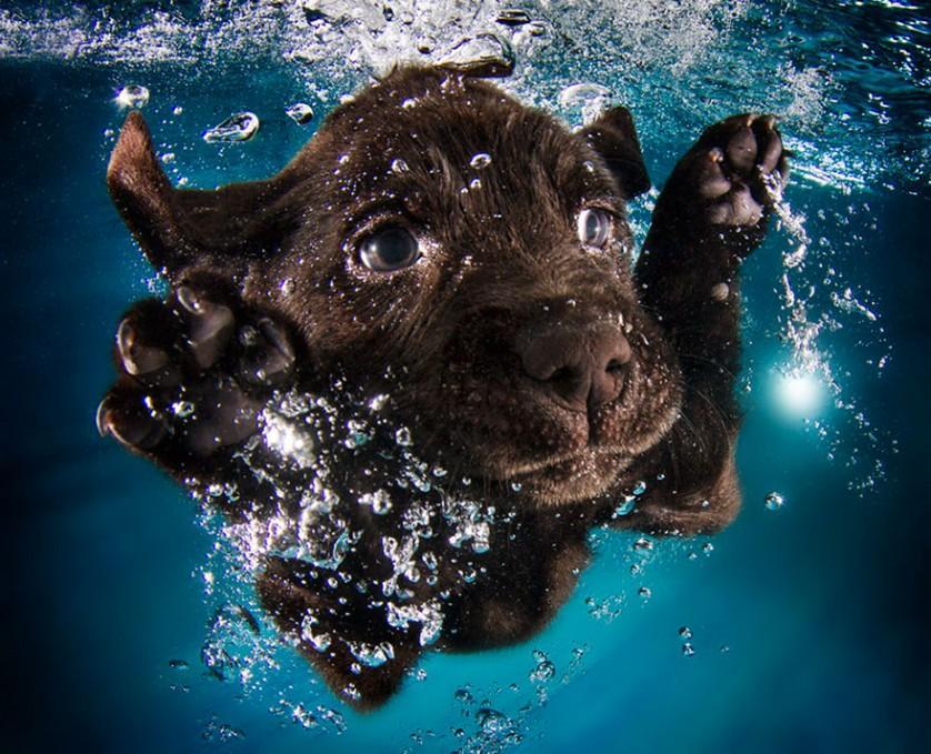 filhotes de cachorro mergulhando (5)