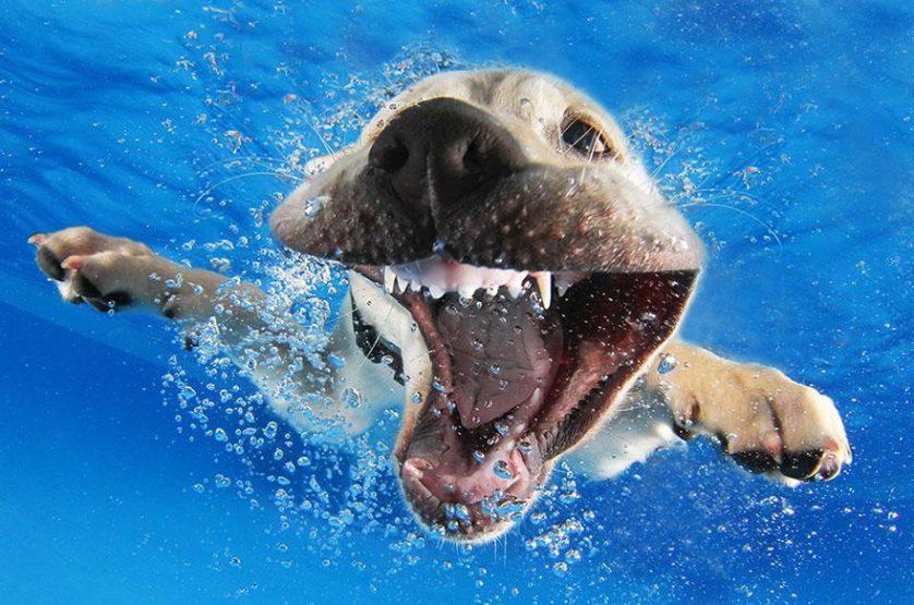 filhotes de cachorro mergulhando (8)