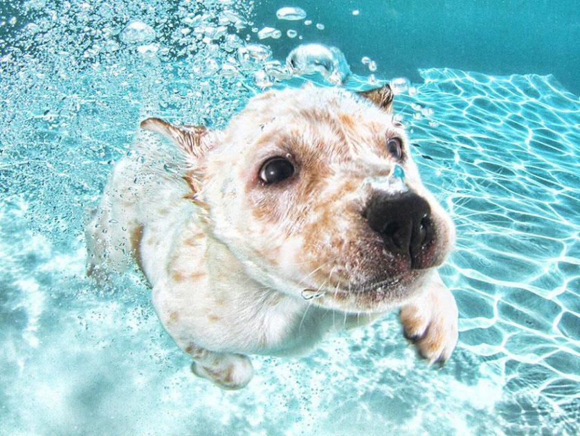 filhotes de cachorro mergulhando (9)
