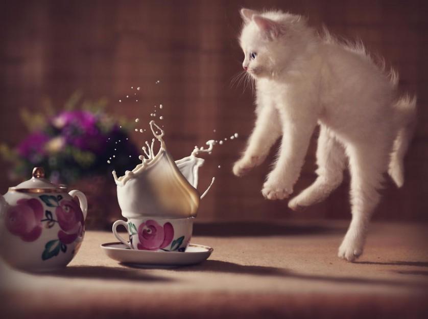 gatos pulando como ninjas 1