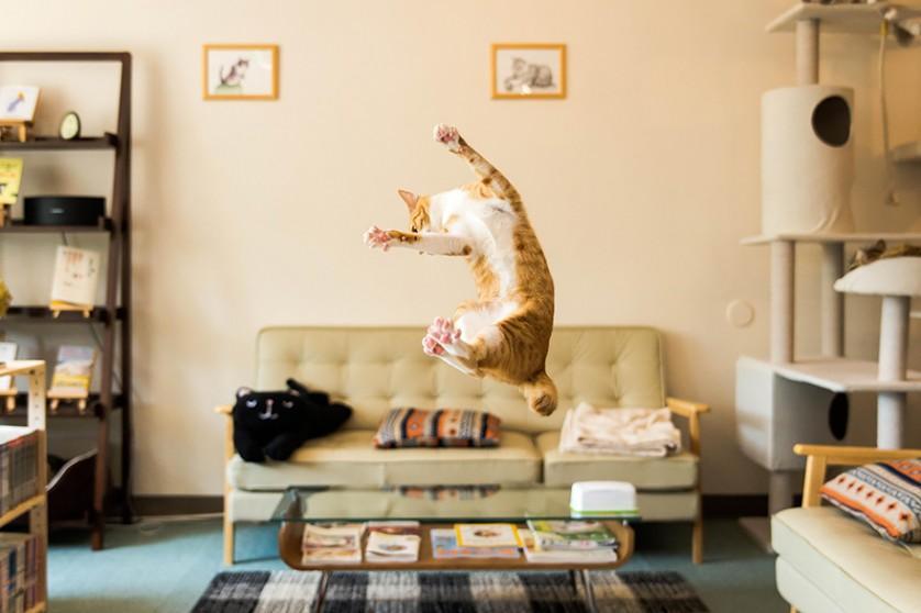 fotos de gatos lindos