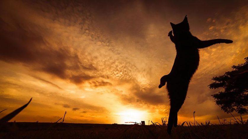 gatos pulando como ninjas 12