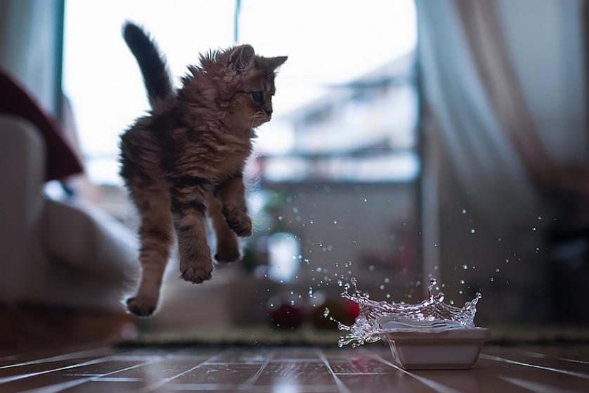 gatos pulando como ninjas 13