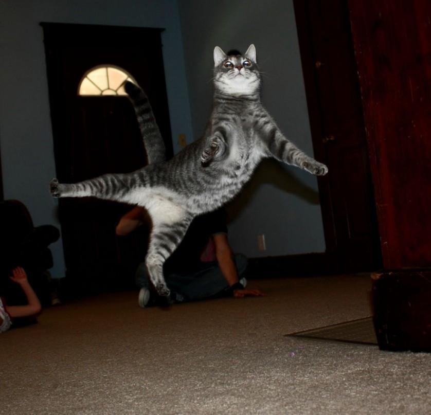 gatos pulando como ninjas 14