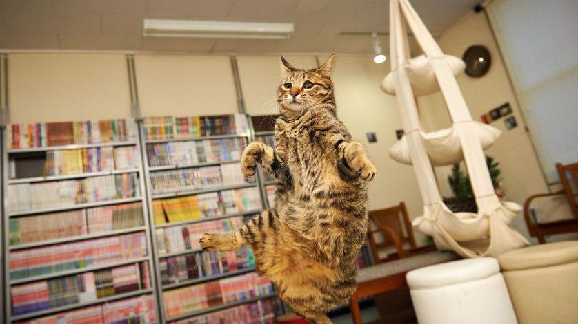 gatos pulando como ninjas 15