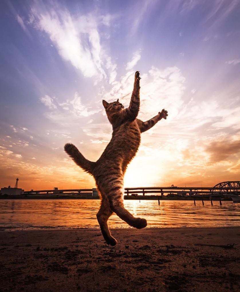 gatos pulando como ninjas 4